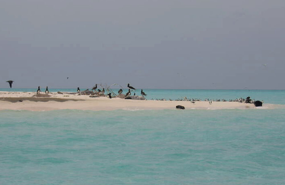 Beautiful places to travel- many-bird-species-in-Tubbataha-Reef